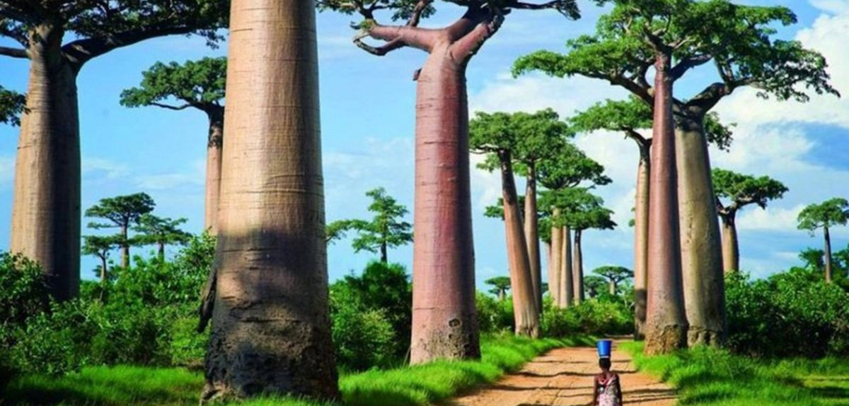 Мадагаскар, 1