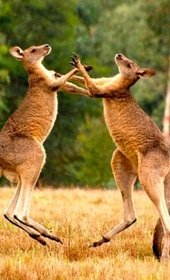 Австралия и Тасмания