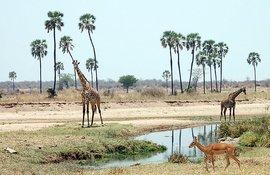 Танзания, 1