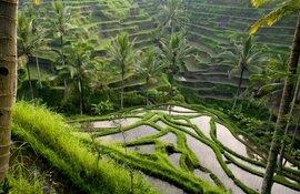 Индонезия (о.Бали), 2