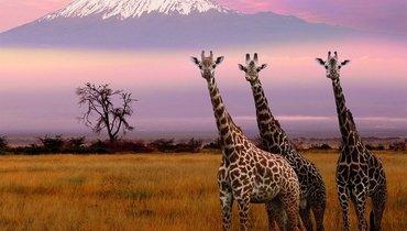 Африка, 3
