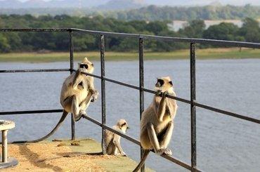 Шри-Ланка Weligama Bay Resort
