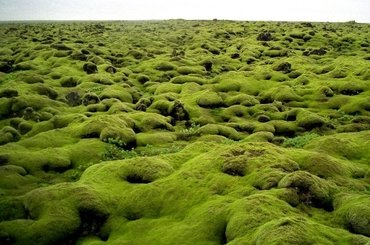 Путешествия в стиле SIESTA-Исландия, 89