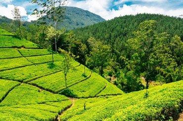 Экскурсионный тур на Шри-Ланку:5 дней/4 ночи , 91