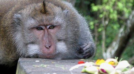 Индонезия (о.Бали)