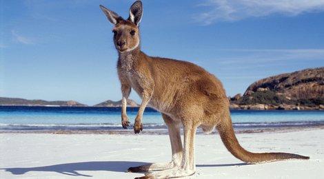 """06.03.19 """"Австралия и Новая Зеландия"""". Начало в 11:00, 83"""