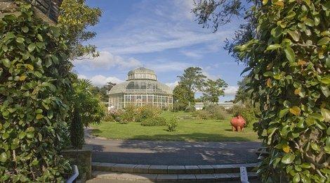 Дублинский ботанический сад, 83