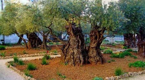 Гефсиманский сад, 83
