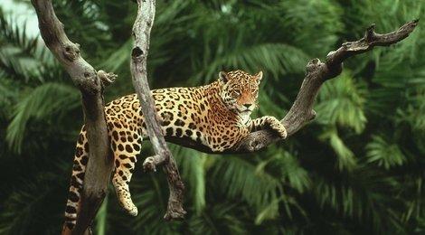 Наследие тропического леса Суматры, 84
