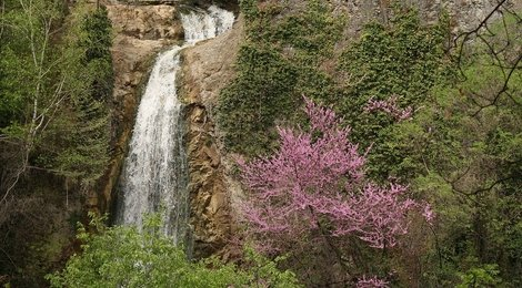 Тбилисский ботанический сад, 83