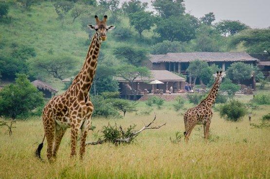 Танзания Grumeti Migration Camp