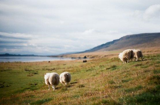 Исландская Сага, 88