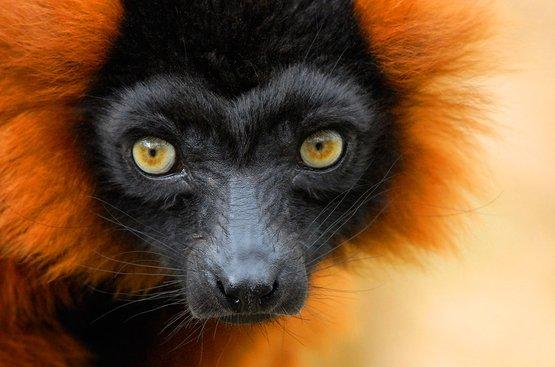 Маврикий + Мадагаскар, 93
