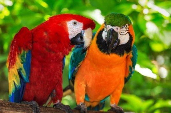 Классика Коста-Рики , 112