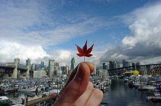 Лучшее в Канаде, 112