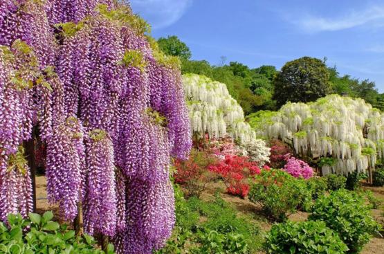 Япония: Майские грезы, 84