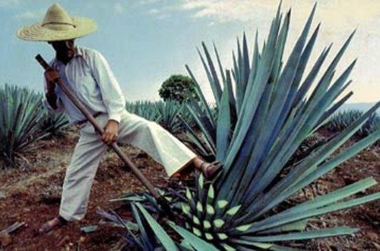 """Групповой тур в Мексику """"Загадки майя и остров Рая"""", 97"""