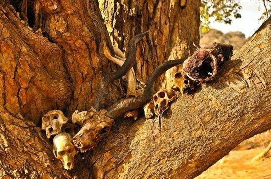 Сафари в Танзании ( 5дн): Тарангире, озеро Эяси и Кратер Нгоронгоро, 88