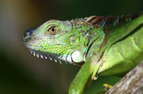 Костариканские Карибы, 86