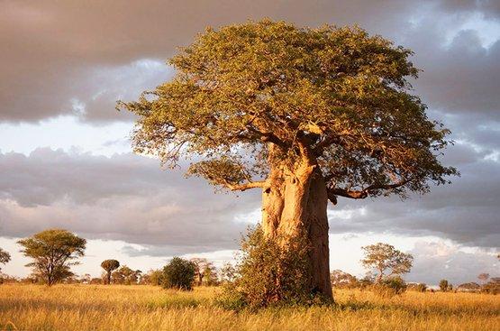 Сафари в Танзании ( 5дн): Тарангире, озеро Эяси и Кратер Нгоронгоро, 91