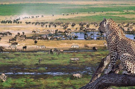 Сафари в Танзании ( 5дн): Тарангире, озеро Эяси и Кратер Нгоронгоро, 90