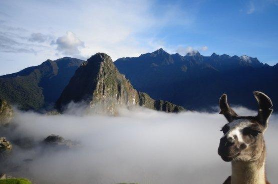 Манящий Перу Изотерический, 84
