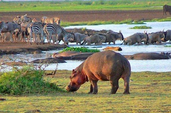 Сафари в Танзании (4 дн): озеро Маньяра и Кратер Нгоронгиро, 90