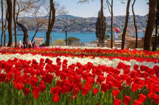 Фестиваль тюльпанов в Стамбуле, 114