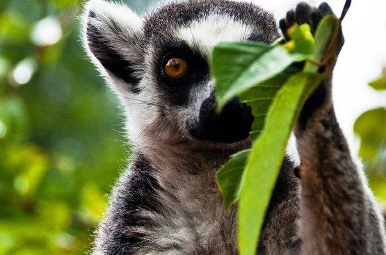Маврикий + Мадагаскар, 88