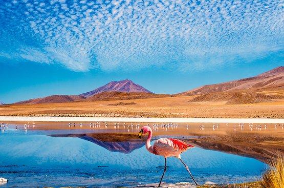 Лучшее в Боливии, 114