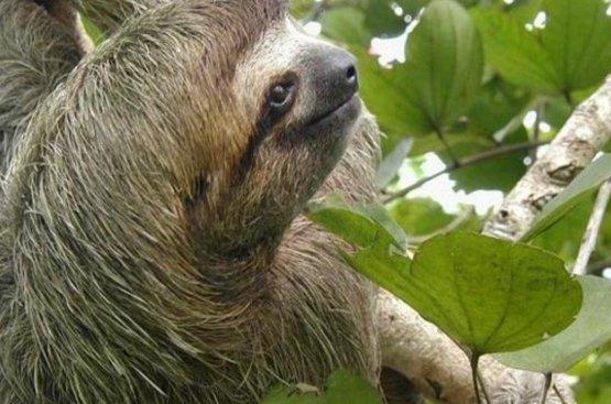 Приключение в Коста-Рике и Накарагуа, 87