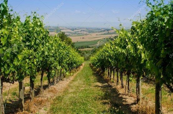 Вина и деликатесы Тосканы и Чинкве Терре, 89