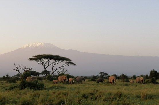 Кения Сафари (5 дн) : Масаи Мара- Озеро Накуру - Амбосели, 112