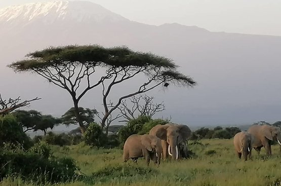 Кения: Найроби (1 н.)+ Сафари (3 н.) + пляжный отдых в Момбаса 4 ночи, 118