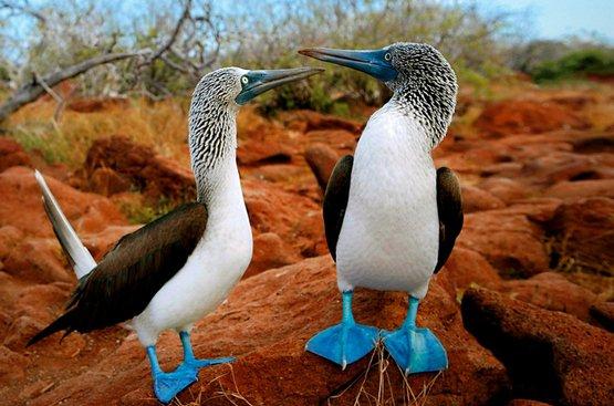 Галапагосы. Черепахи и пингвины, 115
