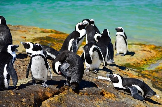 Галапагосы. Черепахи и пингвины, 114
