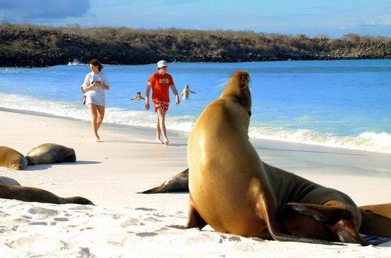 Галапагосы. Черепахи и пингвины, 116
