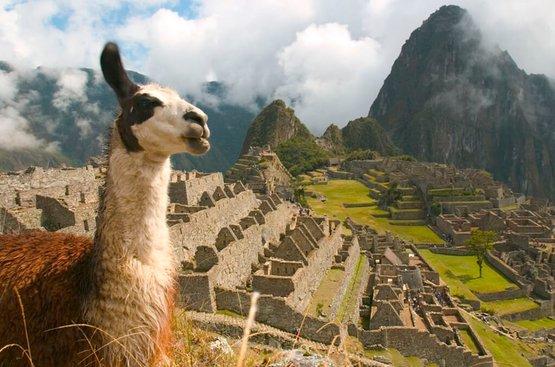 Манящий Перу Паракас, 85