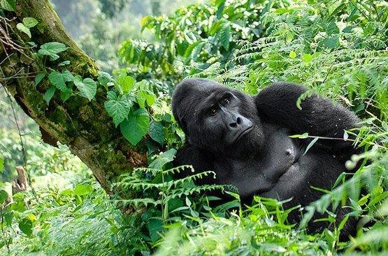Тур по Северу Уганды, 120