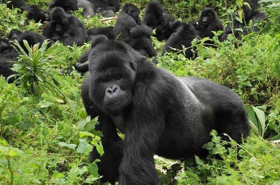 Тур по Северу Уганды, 118