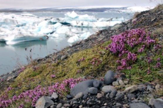 Исландская Сага, 115