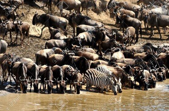 Великая Миграция : Сафари (3 н.) + Найроби (1 ночь)+ пляжный отдых в Момбаса 4 ночи ( авиа включено), 117