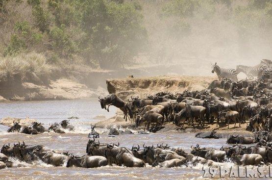 Кения: Найроби (1 н.)+ Сафари (3 н.) + пляжный отдых в Момбаса 4 ночи ( авиа включено), 112