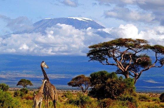 Сафари в Танзании (4 дн): озеро Маньяра и Кратер Нгоронгиро, 88