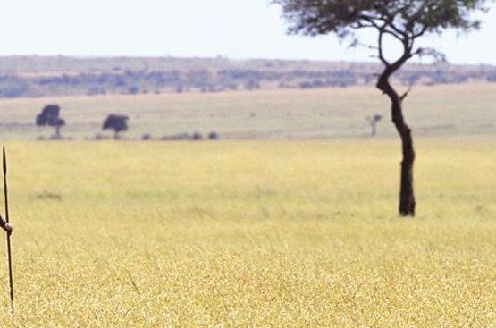 Кения Сафари (8 дн) : Найроби, Самбуру, Заповедник Ол Педжета, Озеро Накуру, Масаи Мара, 92