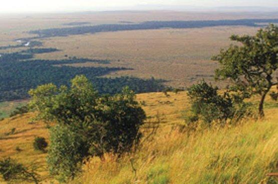 Кения Сафари (4 дн) : Озеро Накуру, Масаи Мара, 115