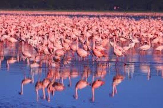 Кения Сафари (4 дн) : Озеро Накуру, Масаи Мара, 112