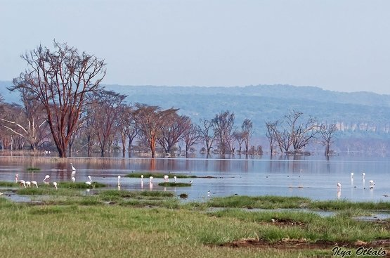 Кения Сафари (8 дн) : Найроби, Самбуру, Заповедник Ол Педжета, Озеро Накуру, Масаи Мара, 88