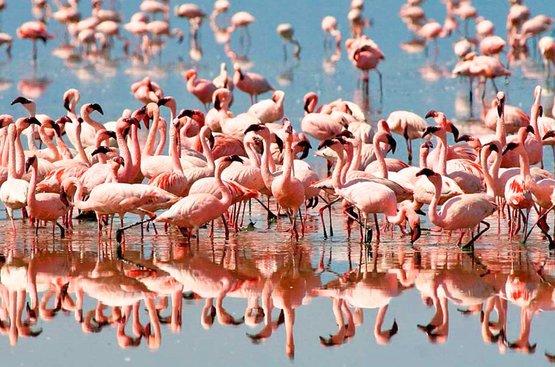 Сафари в Танзании (4 дн): озеро Маньяра и Кратер Нгоронгиро, 91