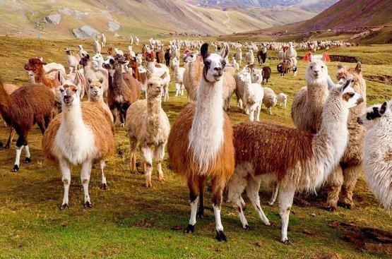 Мечта посетить Перу, 120